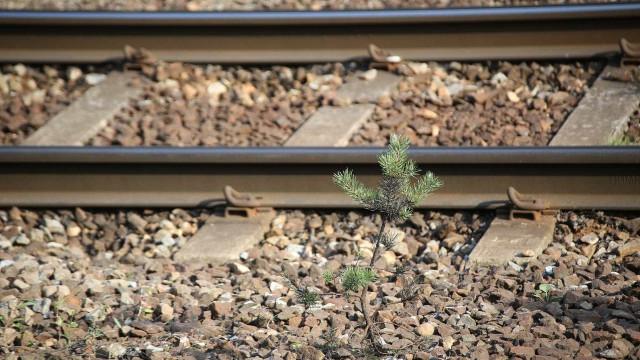 Restabelecida circulação na Linha da Beira Alta