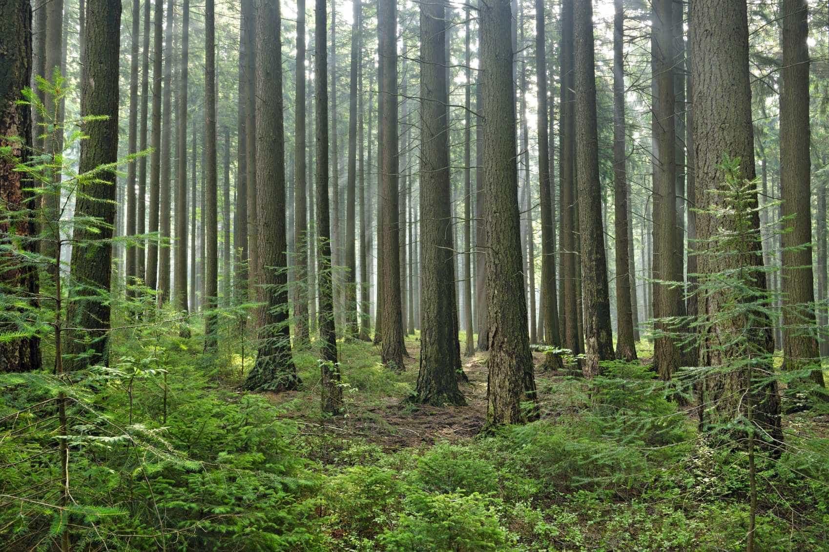 Limpeza das florestas e reflorestação terão benefícios fiscais