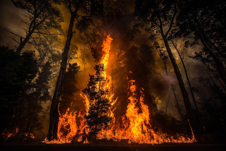 """Salvar a floresta? Partidos têm de """"passar à prática"""" e chamar quem sabe"""