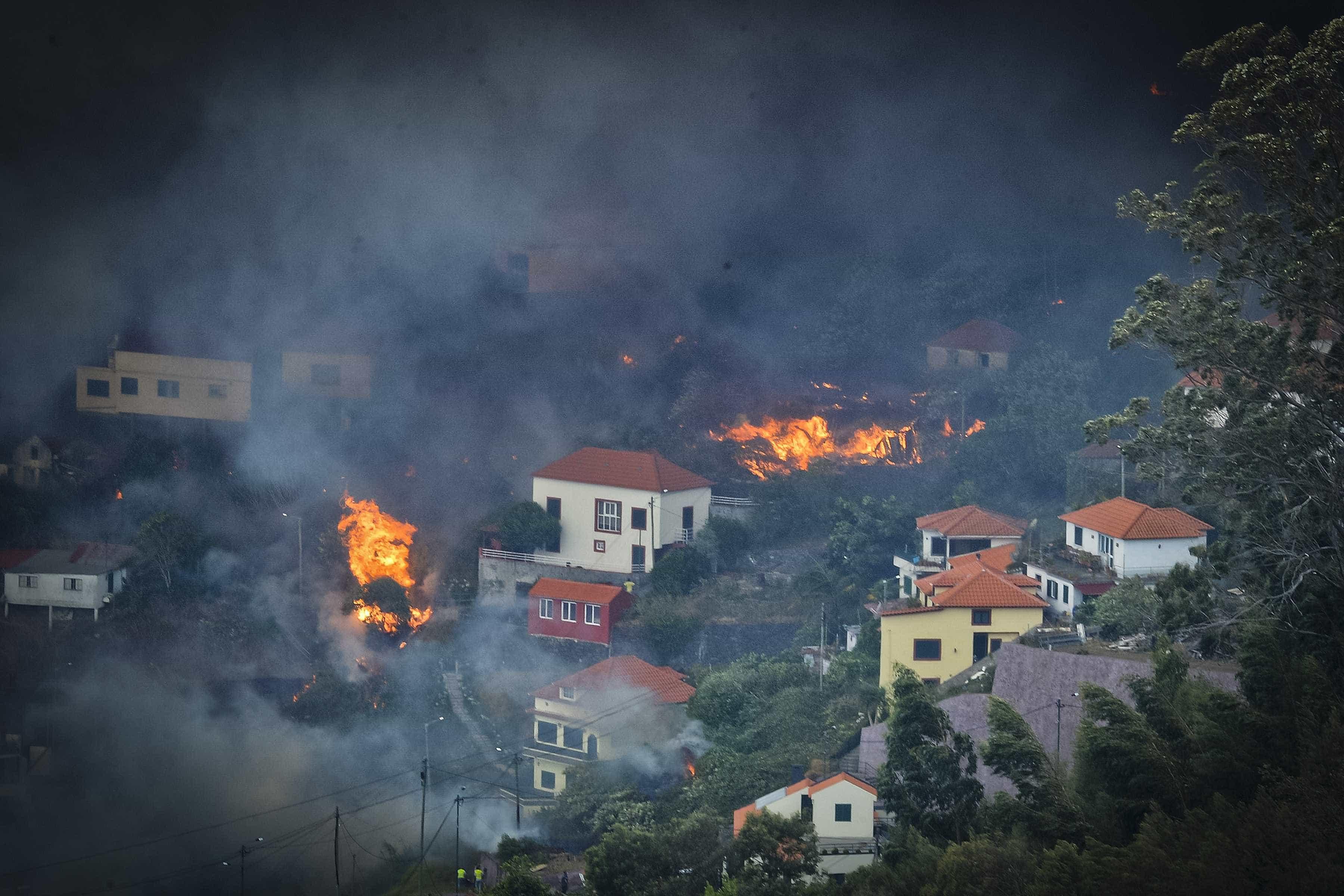 Parques de madeira queimada apenas com 6% de capacidade utilizada