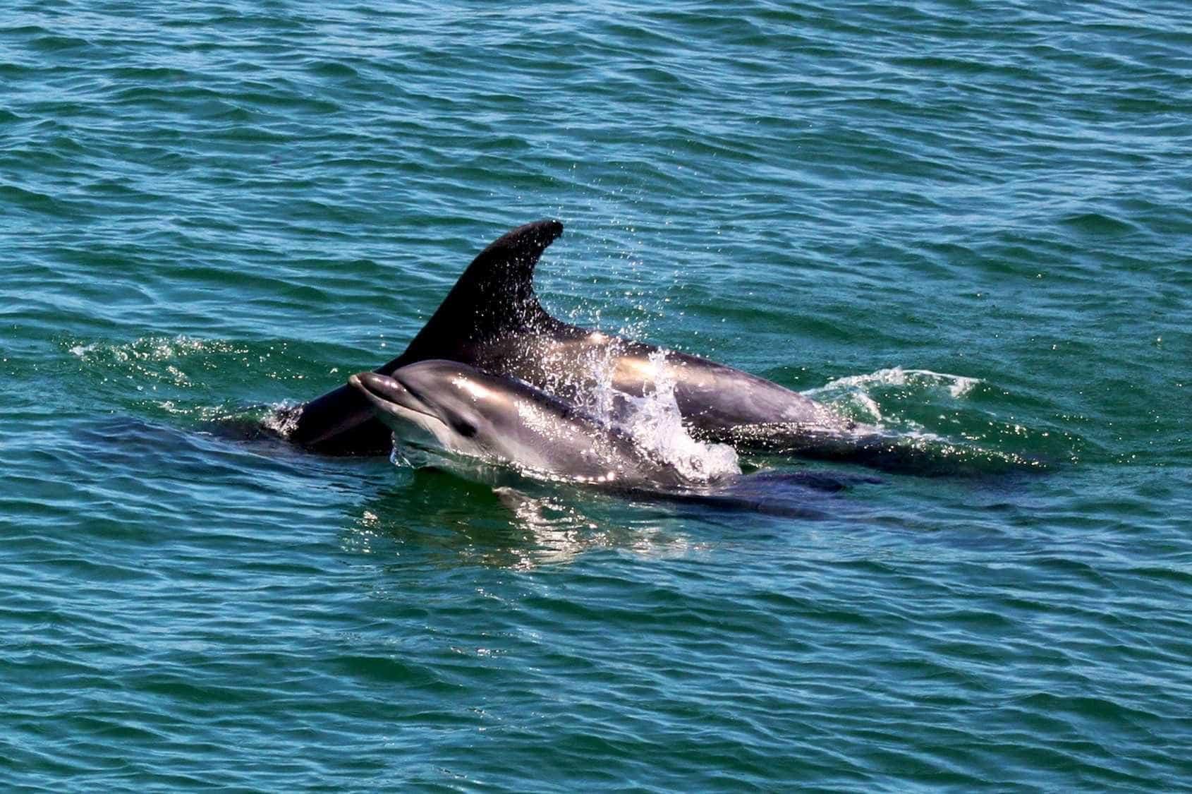 Golfinho desaparecido da Doca dos Olivais em Lisboa apareceu hoje morto