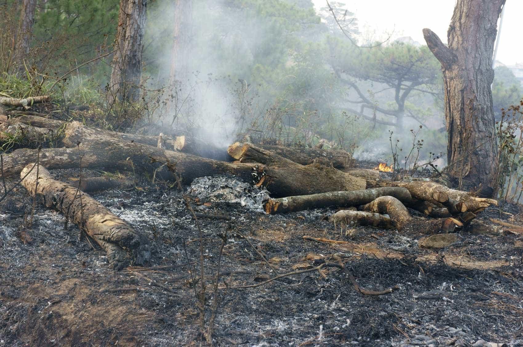 """Homem detido em Arouca por espalhar brasas no mato para """"propagar fogo"""""""