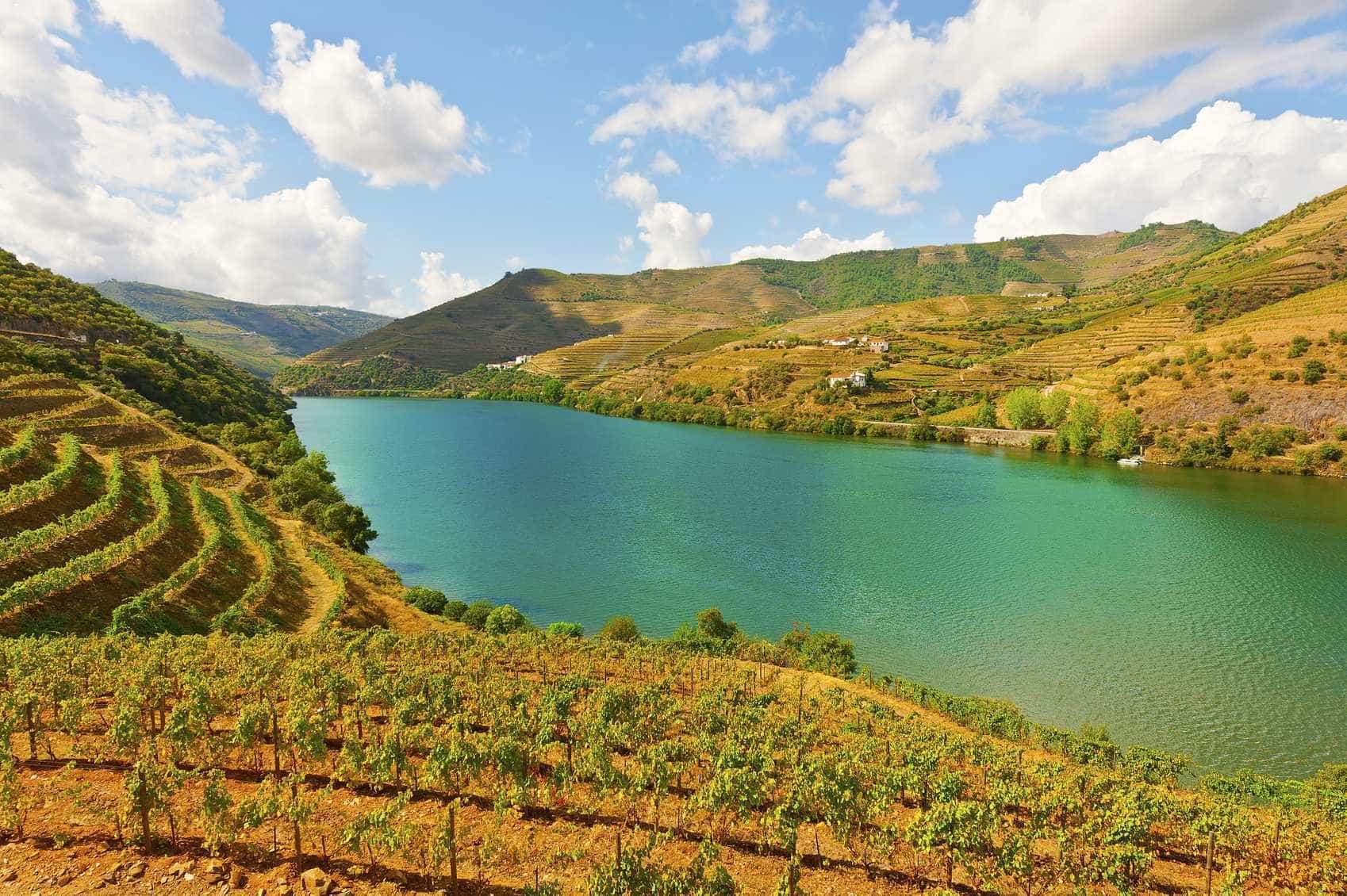 Este ano, teremos a mais baixa produção de vinho dos últimos 20 anos