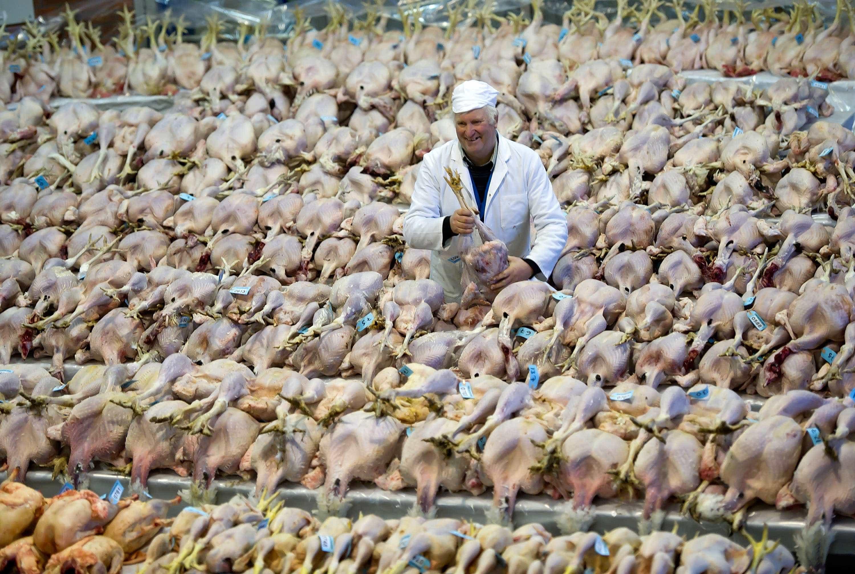 Empresa portuguesa promete investir 18 milhões na produção de frangos