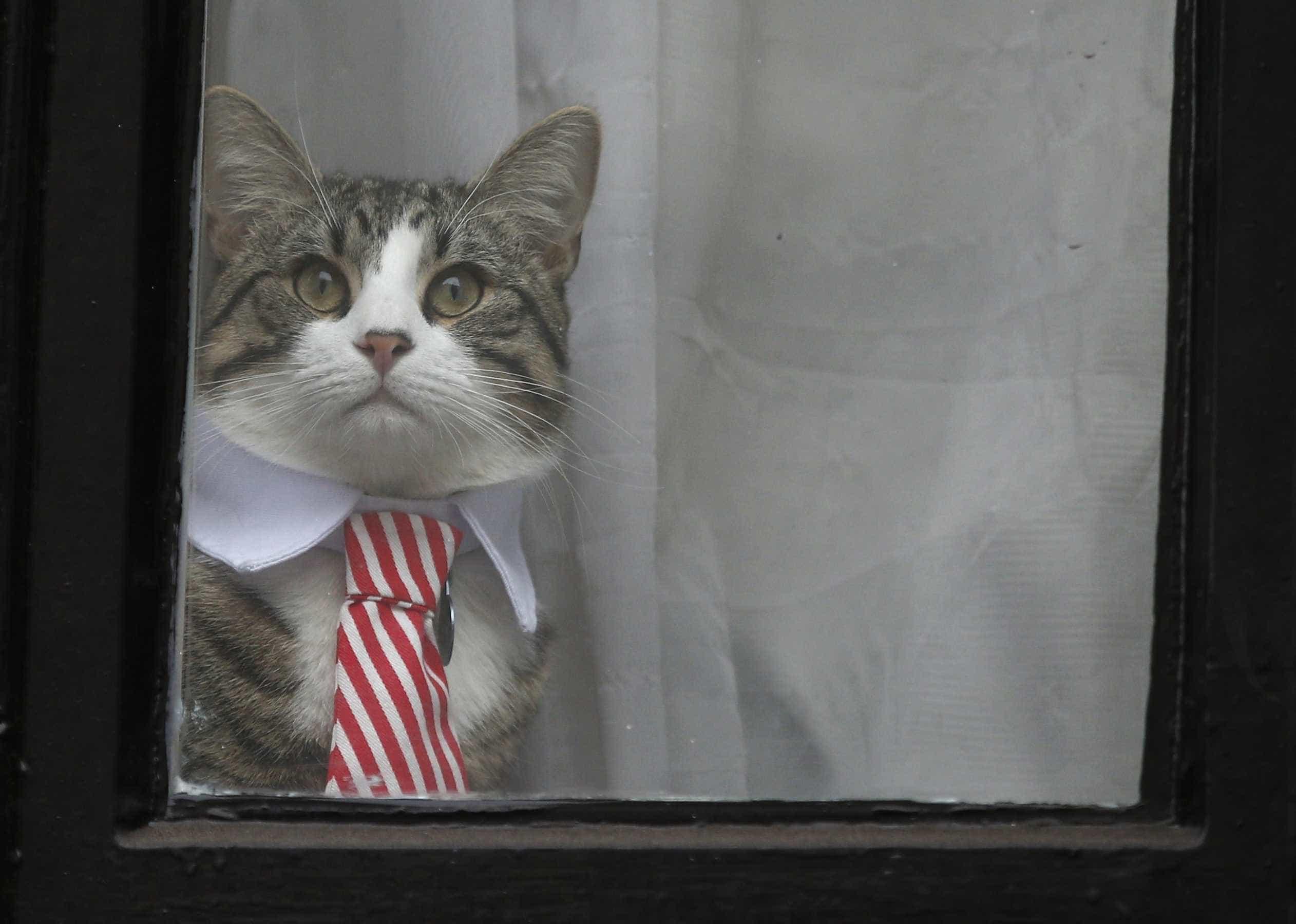 Assange 'aconselhado' a cuidar melhor do gato e a limpar a casa de banho