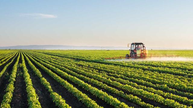 Avanços na agricultura não são suficientes para preservar biodiversidade