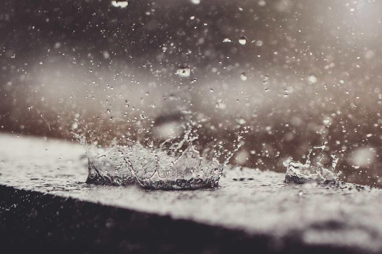 Chuva torrencial causa derrocadas e queda de árvore na Sertã