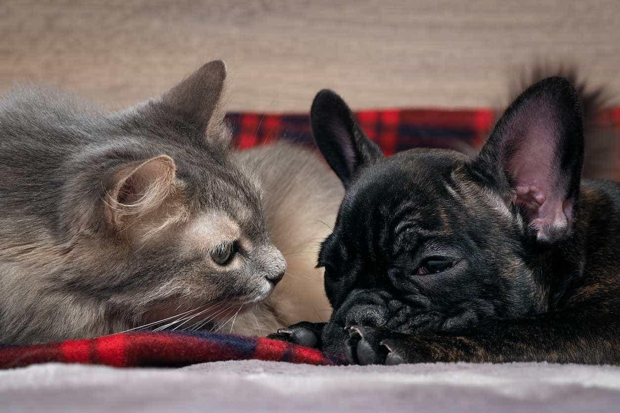 Gaia: Há dezenas de cães e gatos à sua espera para serem adotados