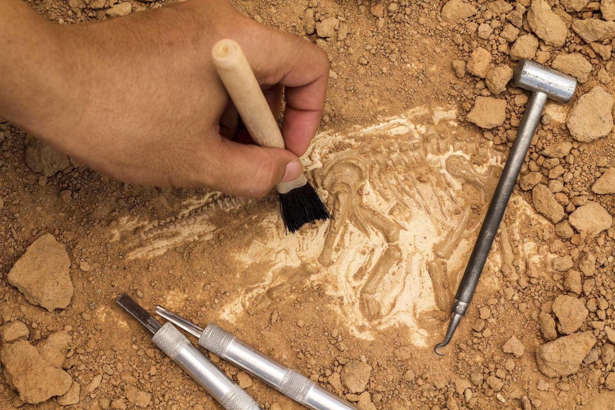 Descoberto na Argentina cemitério de dinossauros com 220 milhões de anos