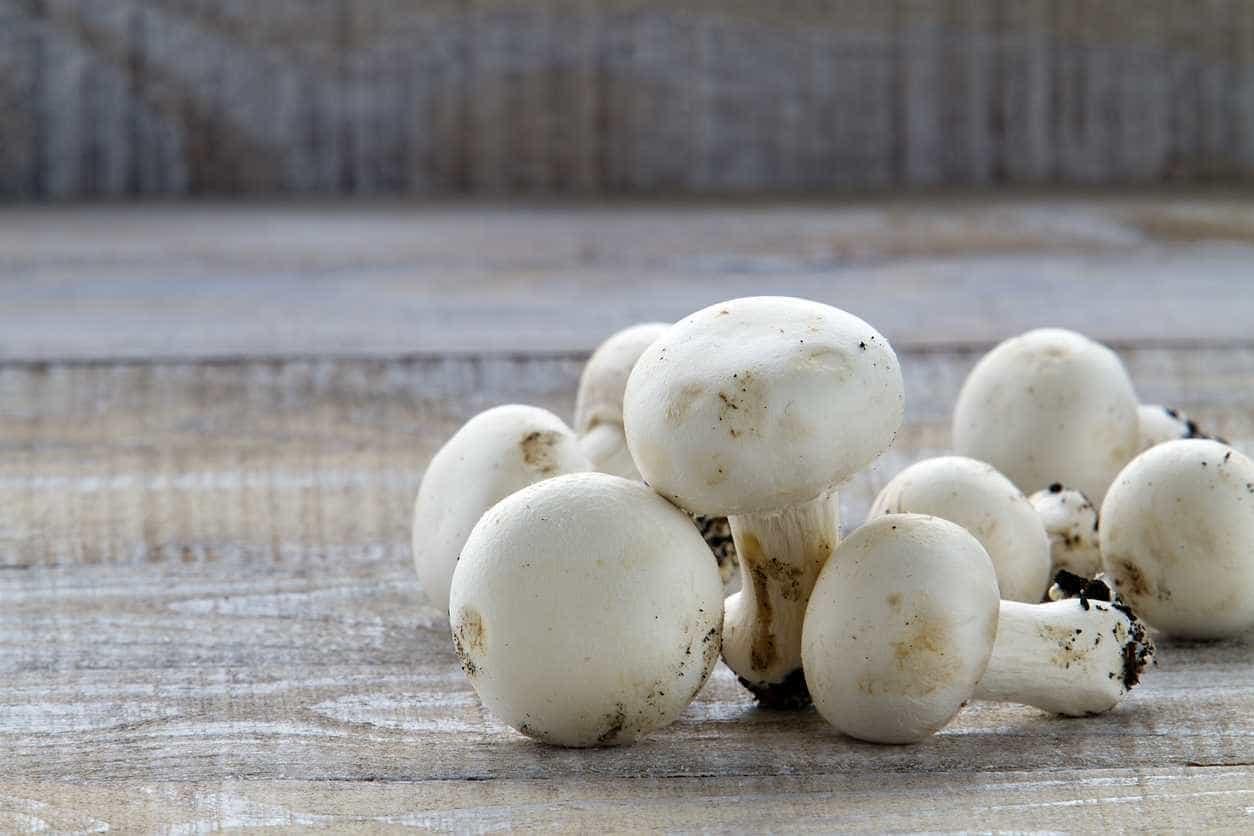 Especialistas defendem cogumelos como complemento para tratar cancro