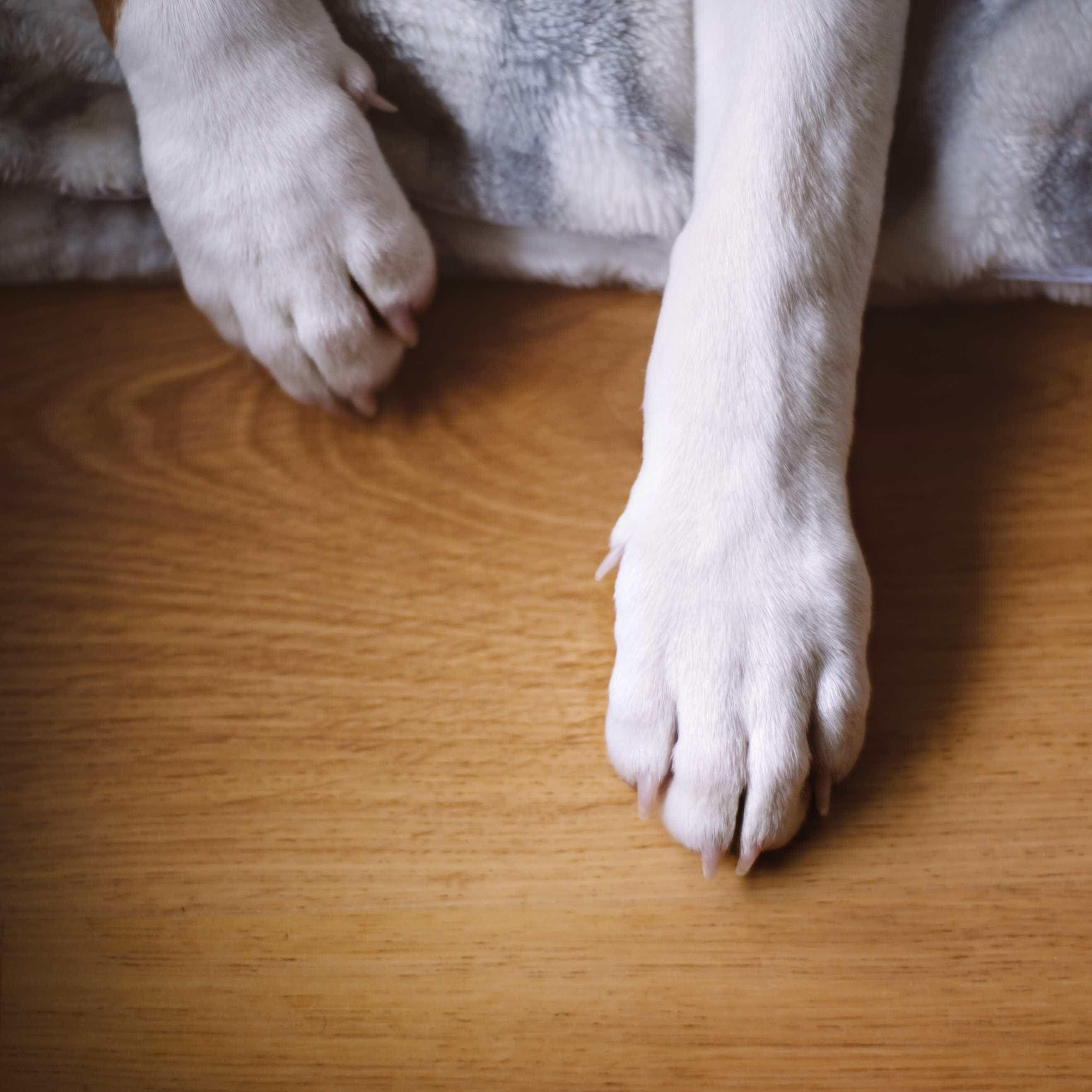 Cão acusado de crime de ódio por fazer cocó à porta de desconhecido