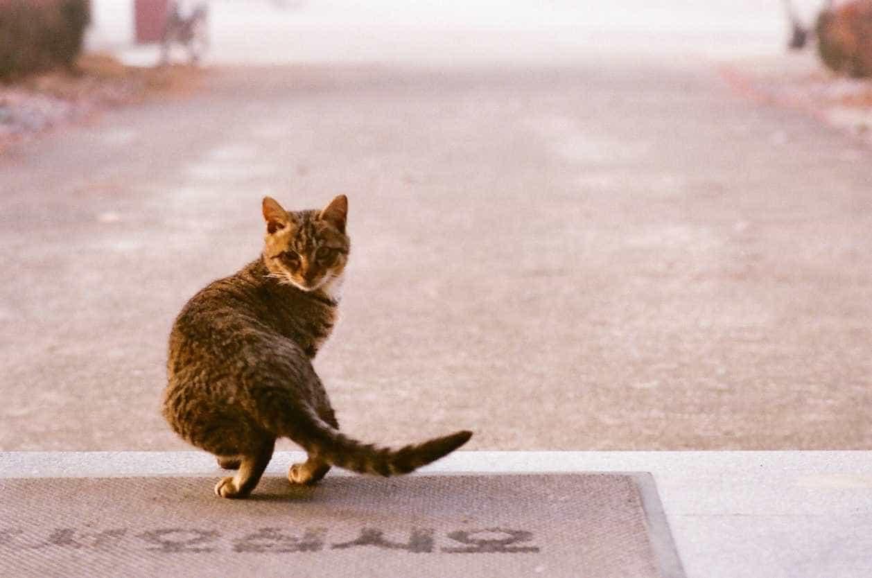 Matosinhos vai capturar e esterilizar gatos assilvestrados