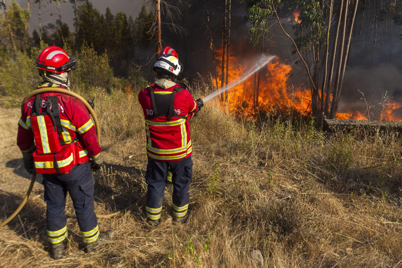 Fogo em Azeméis com quatro frentes ativas obrigou a evacuação de casa