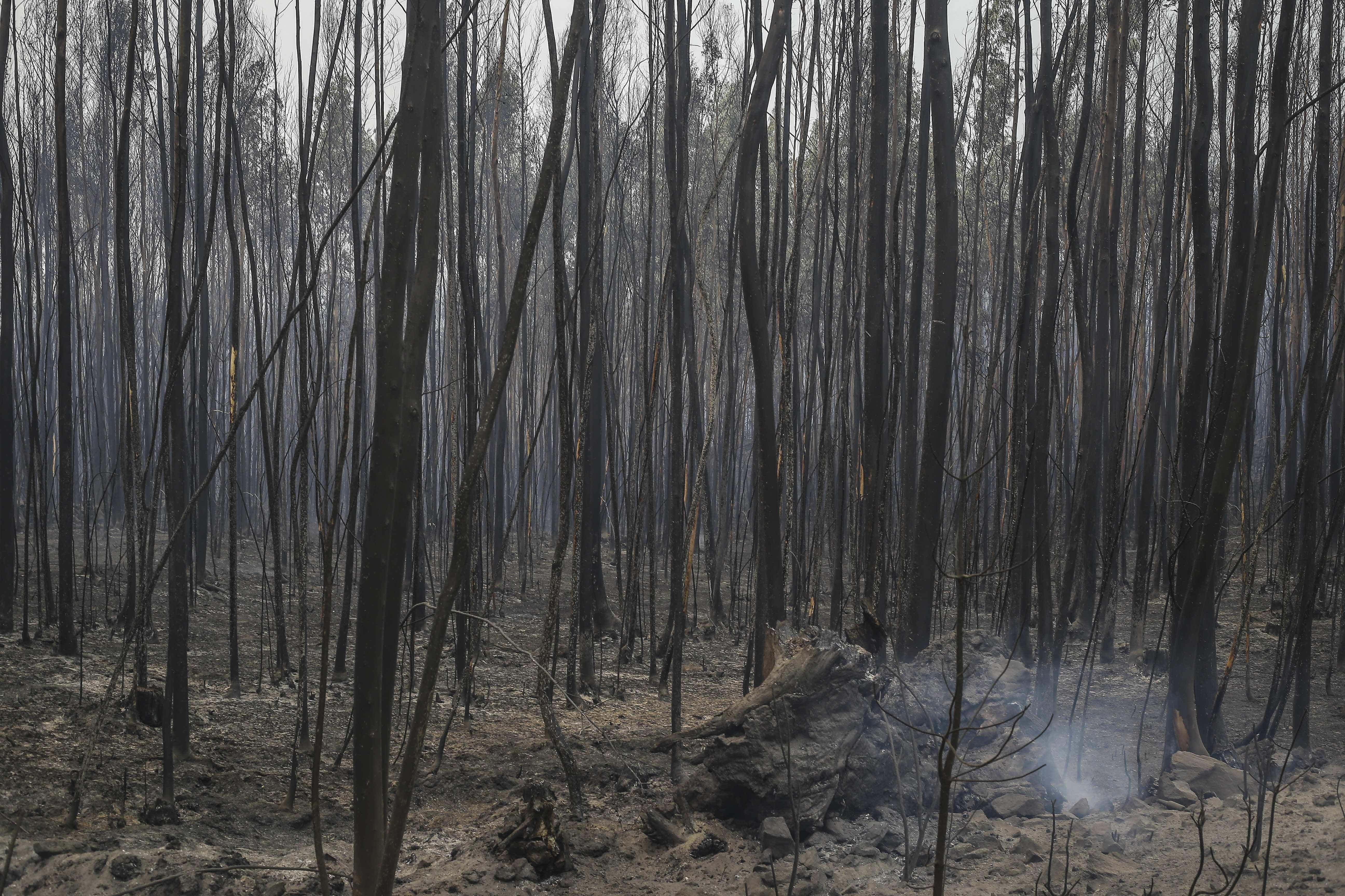 Dominado fogo em Alcanena, distrito de Santarém