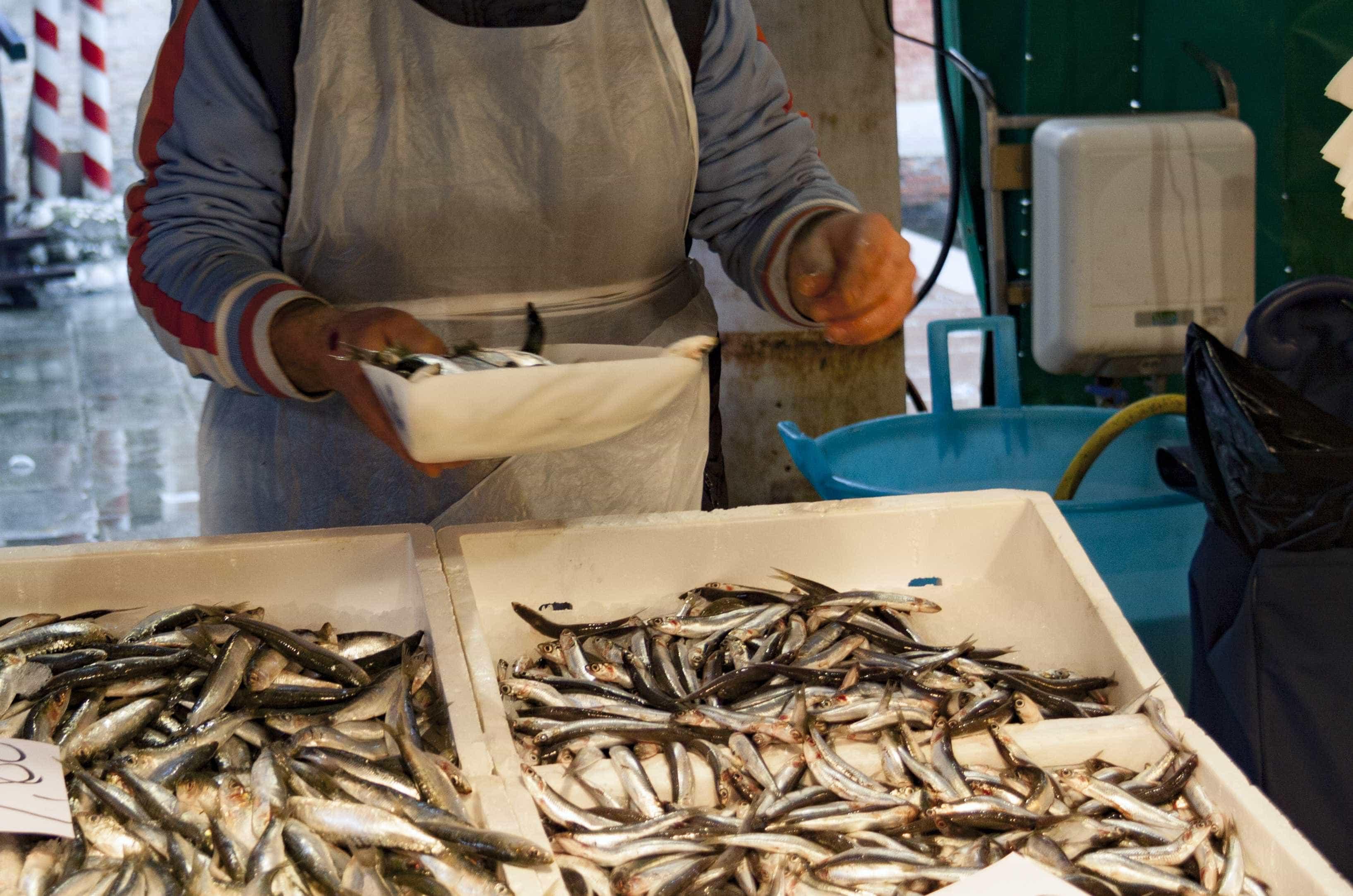 Governo alarga candidaturas a apoio à proibição da pesca da sardinha