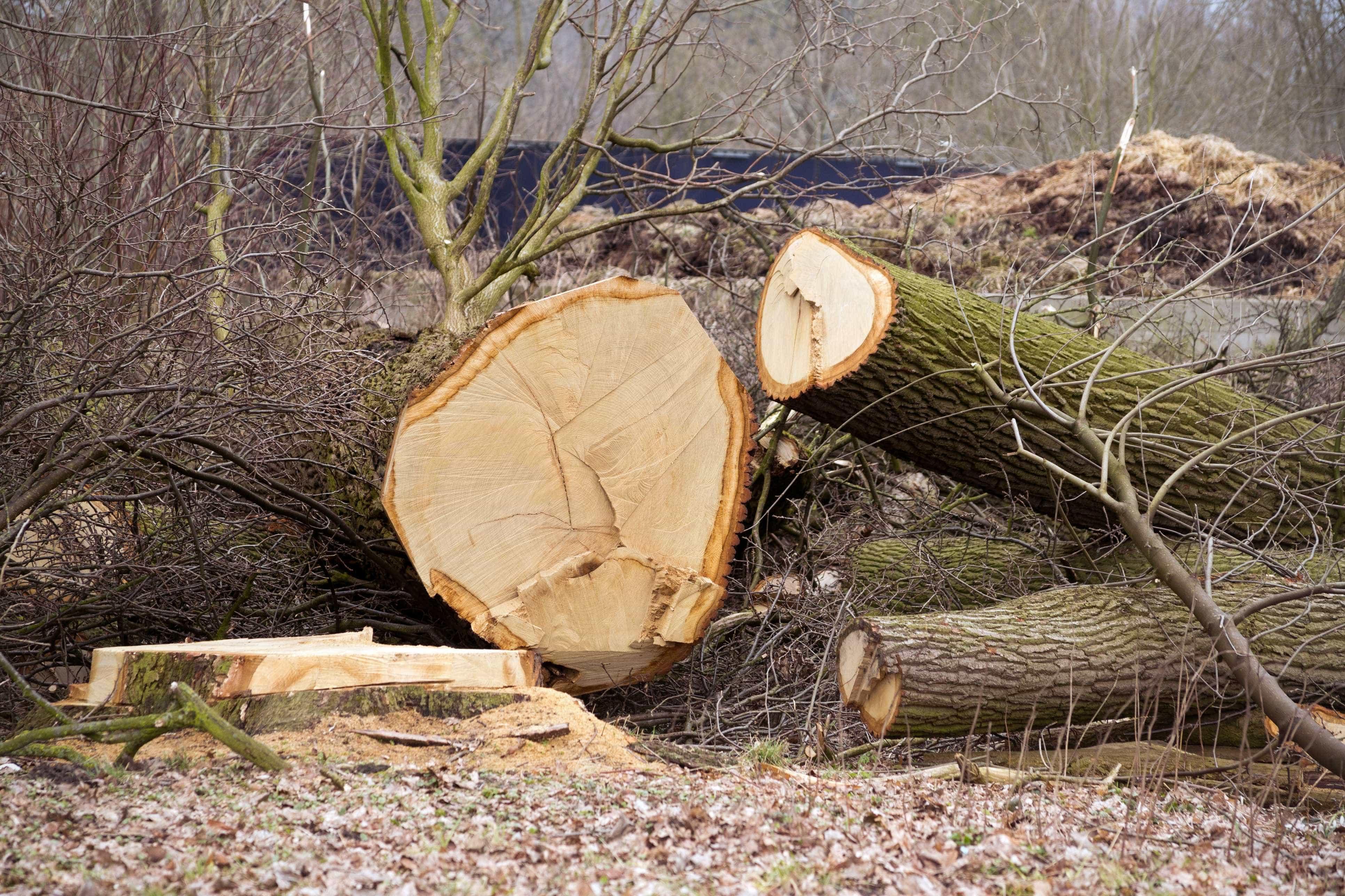 Homem morre em queda enquanto podava árvore em Paredes de Coura