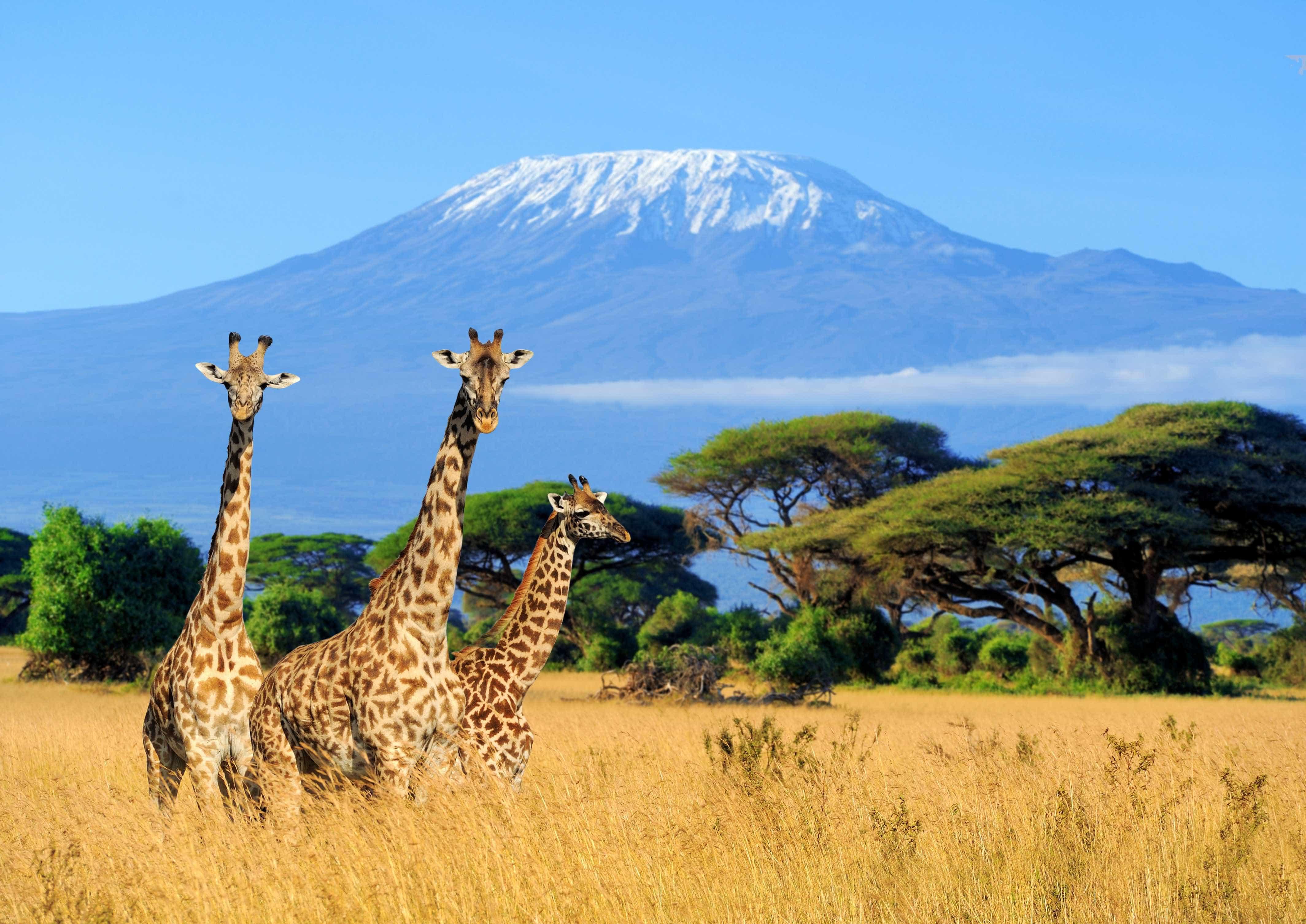 Deixe-se deslumbrar pelas fascinantes paisagens africanas