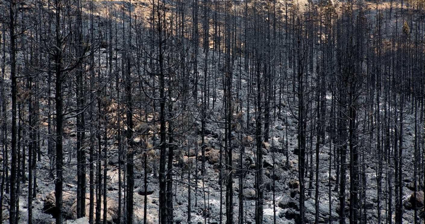 Homem que morreu em fogo de Azeméis tinha autorização para queimada