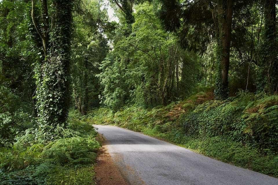 Concurso para guardas-florestais que deu polémica conta com novas regras