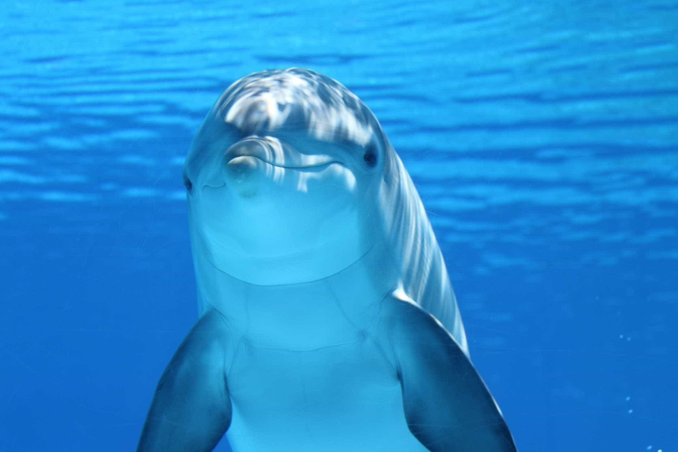 Golfinho encontrado morto em praia de Cascais