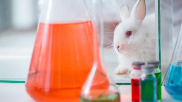 Suíça vai referendar fim de testes experimentais em animais e humanos