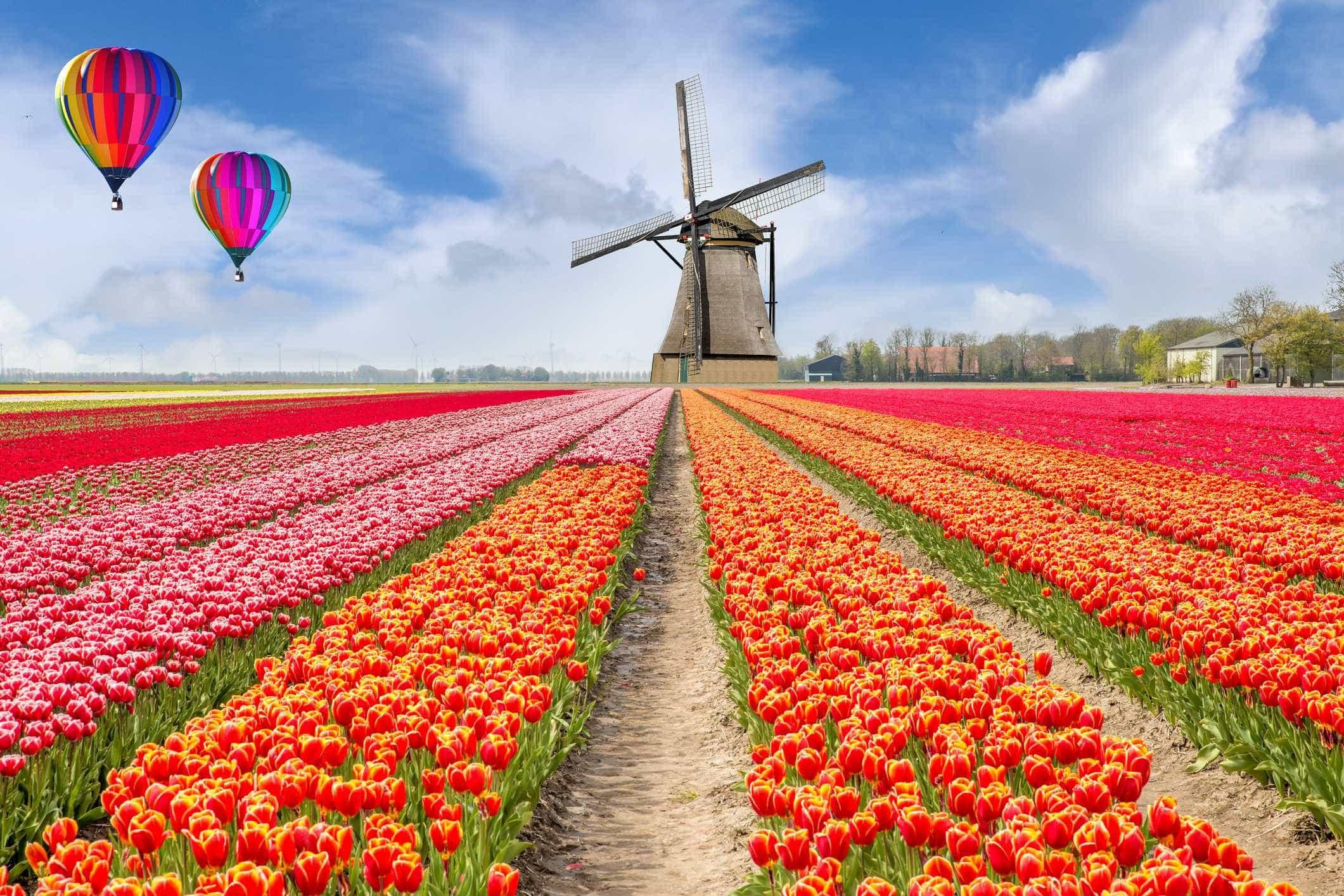 Os melhores destinos para visitar na primavera