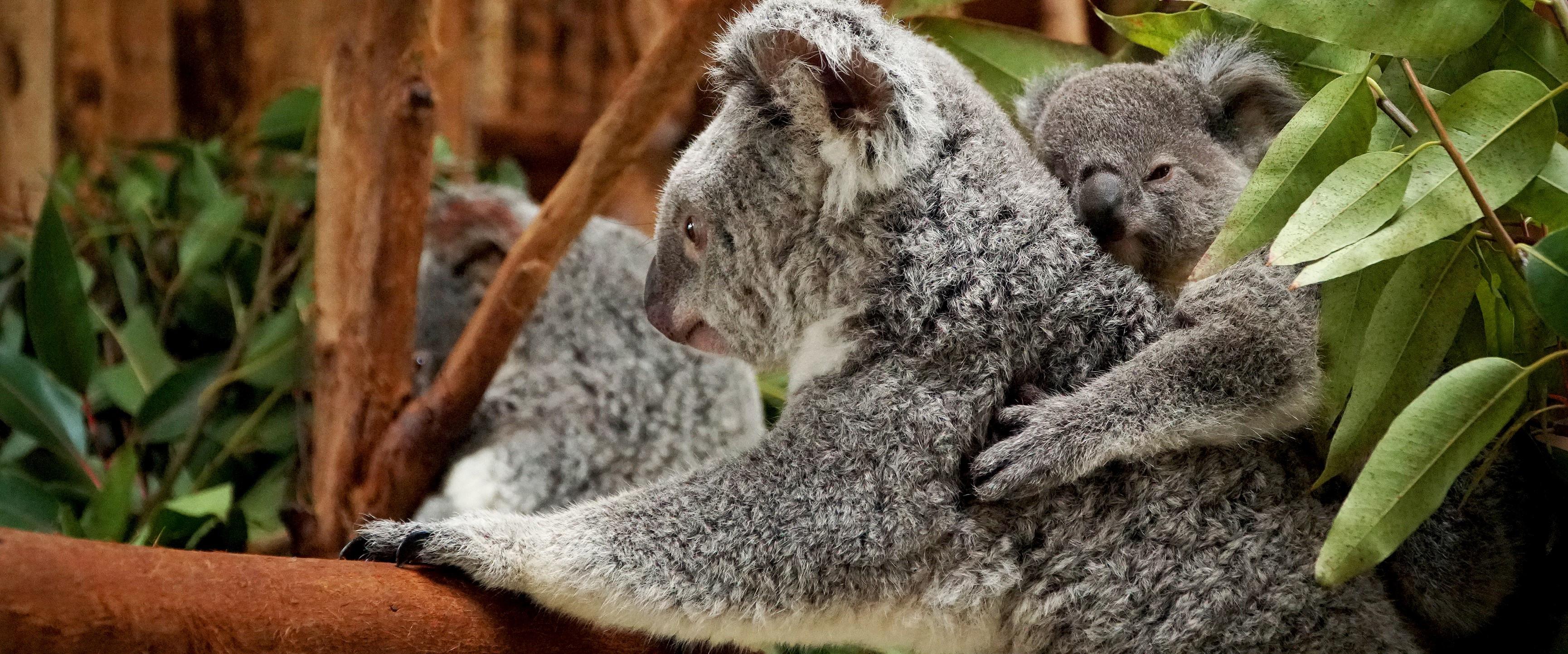 Há animais que passam mais de metade do dia... a dormir. Sabia?