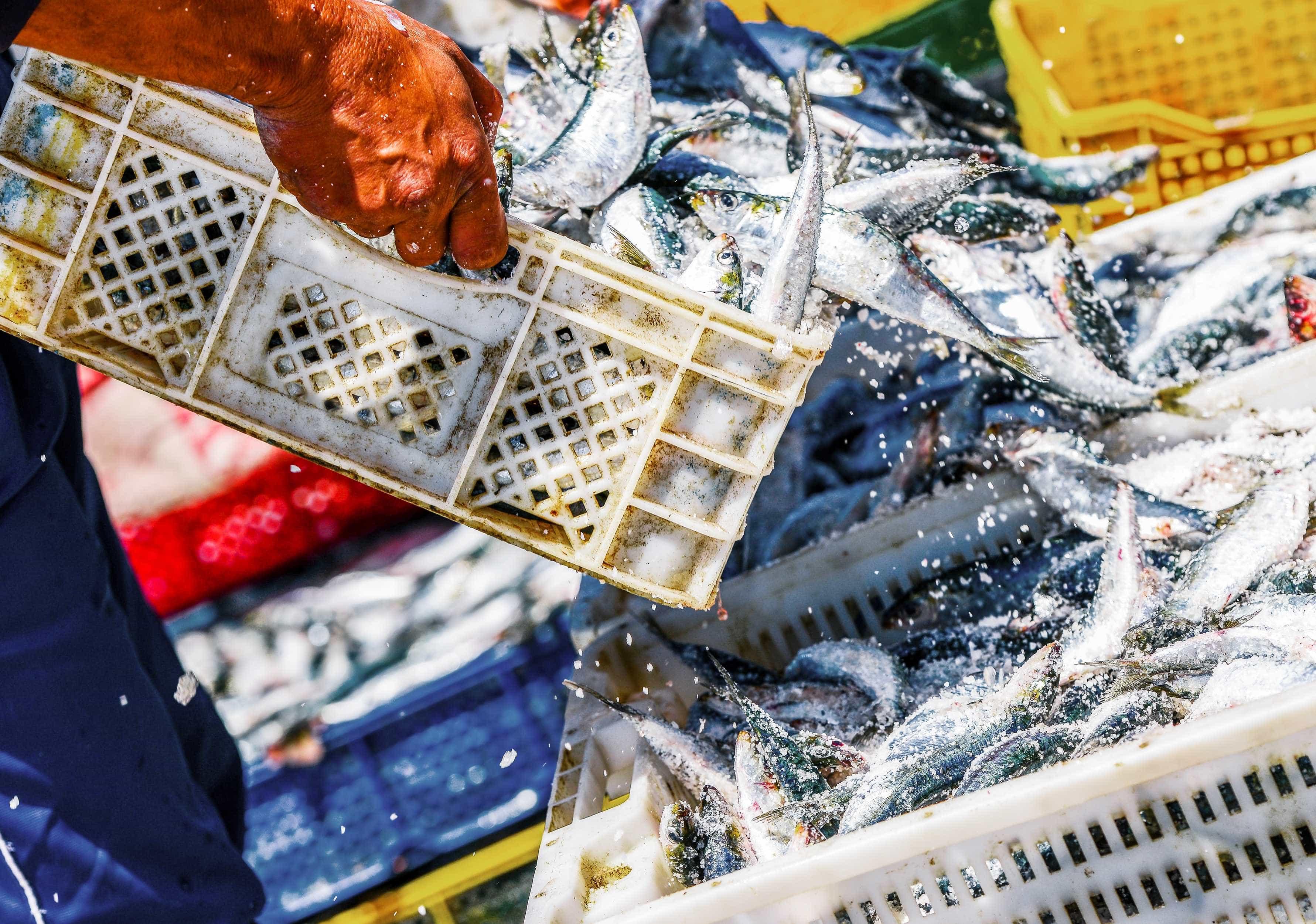 Inspetores das pescas retomam hoje greve ao trabalho extraordinário