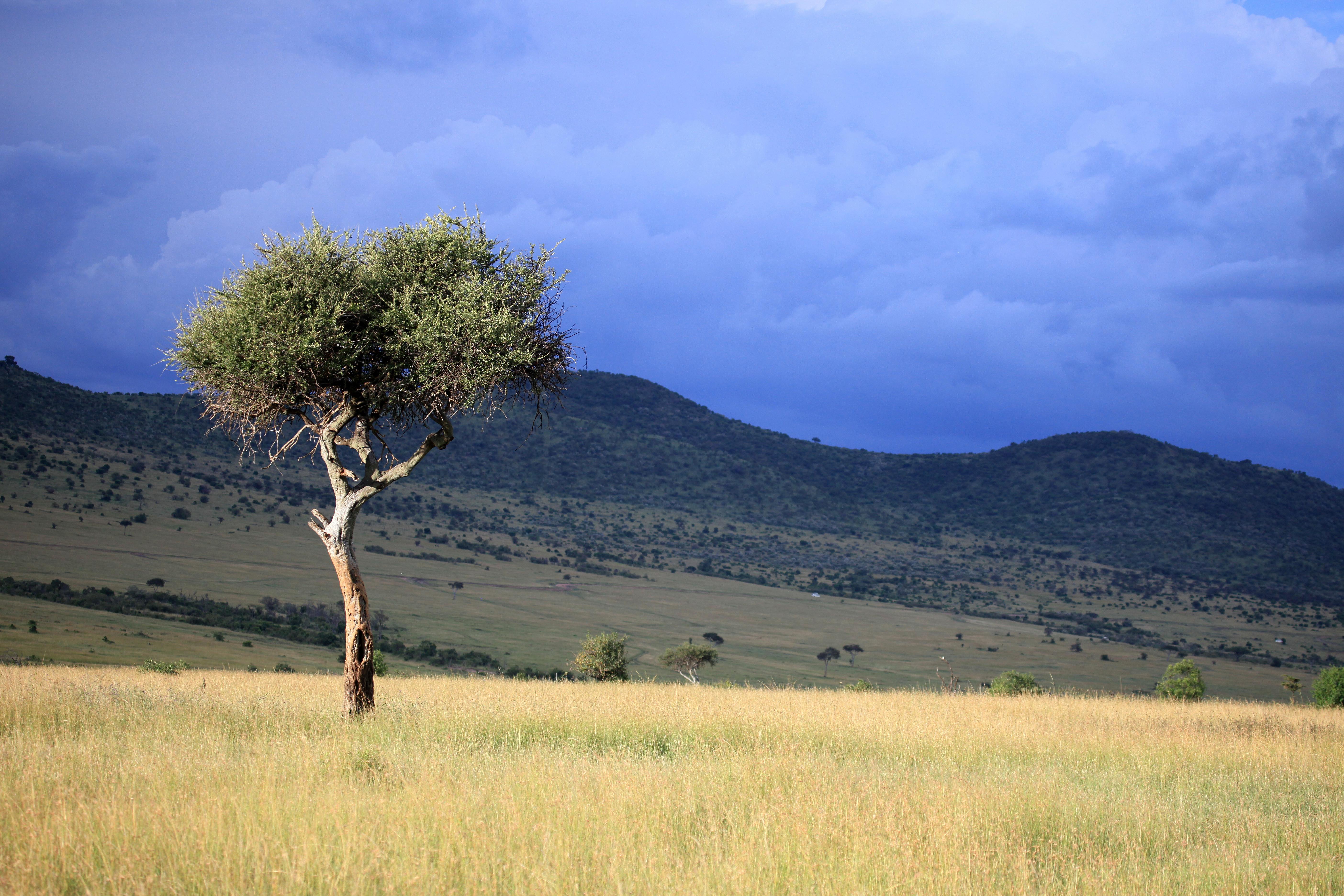A enorme fenda que 'poderia' ter dividido a África ao meio