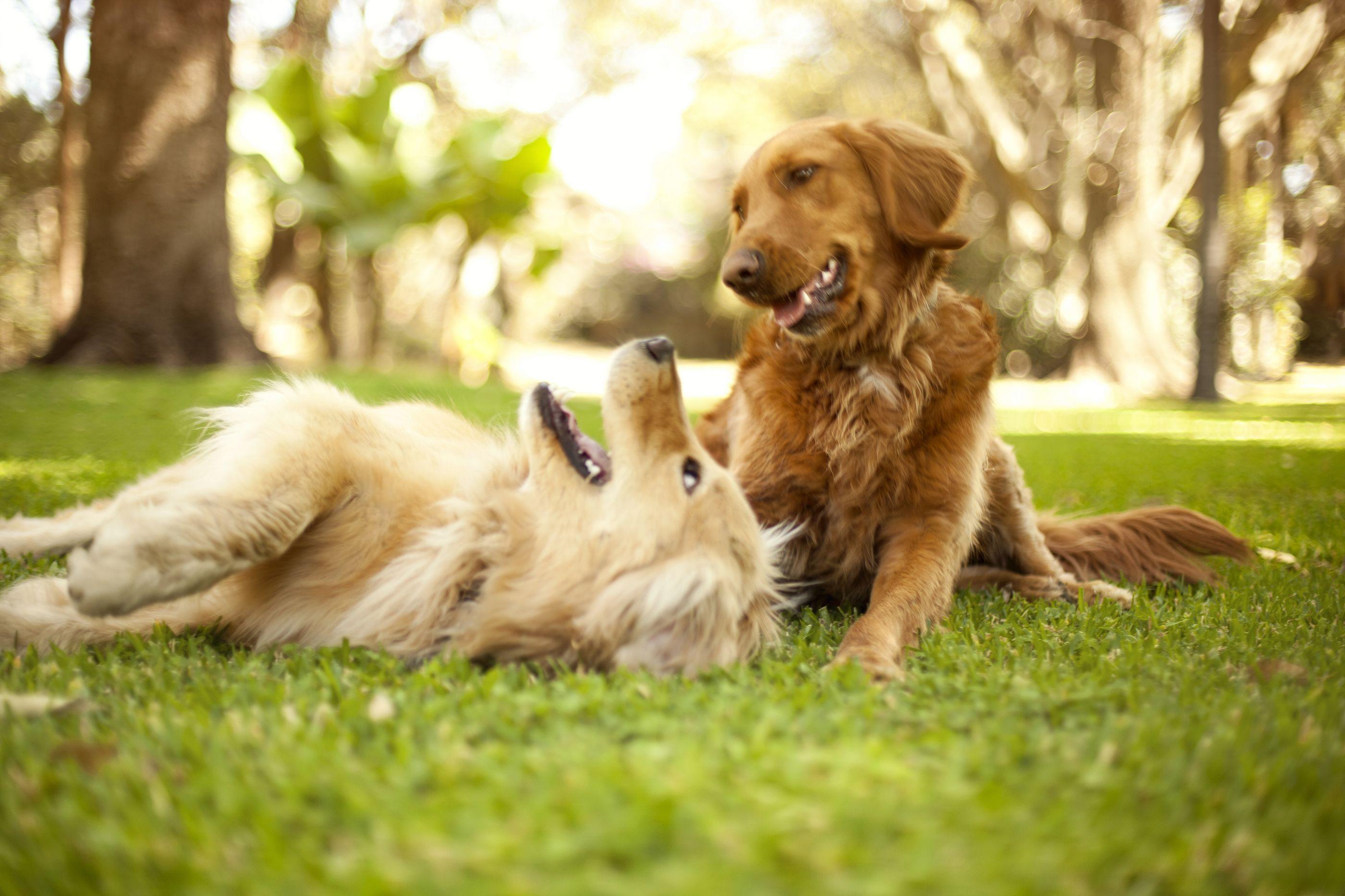 Aplicação estilo Tinder ajuda pessoas a adotarem cães na Lituânia