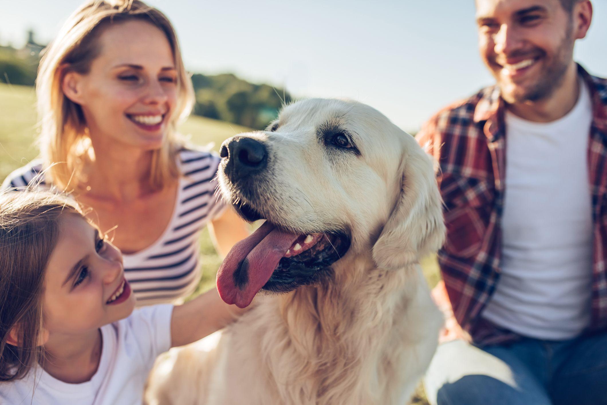Vai adotar um cão? Garanta estes 10 essenciais antes de o patudo chegar