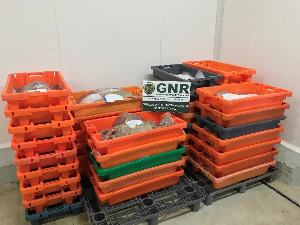 GNR apreendeu 200 quilos de raia curva num armazém em Ílhavo