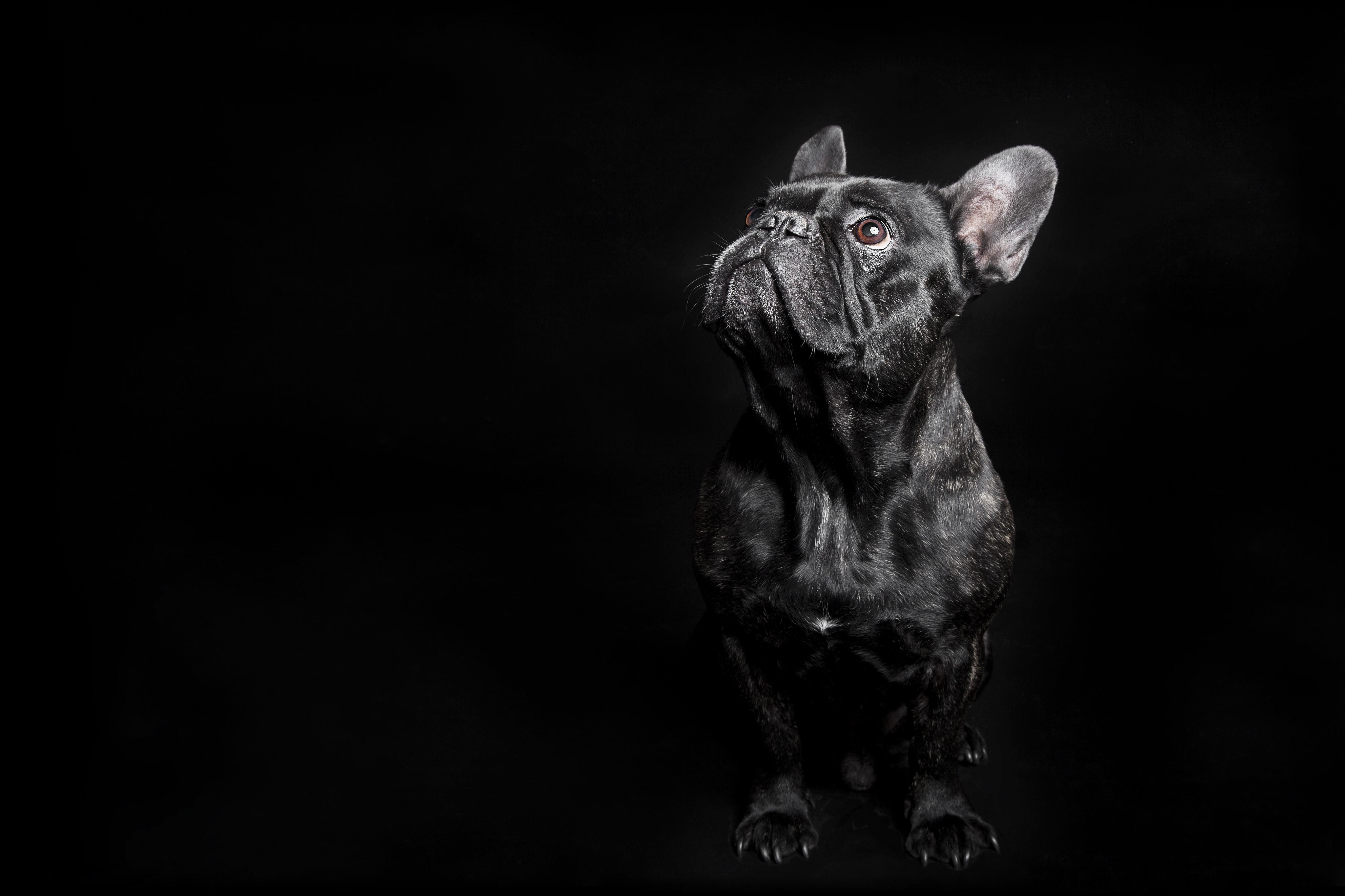 Estará o seu cão entre os mais inteligentes do mundo?