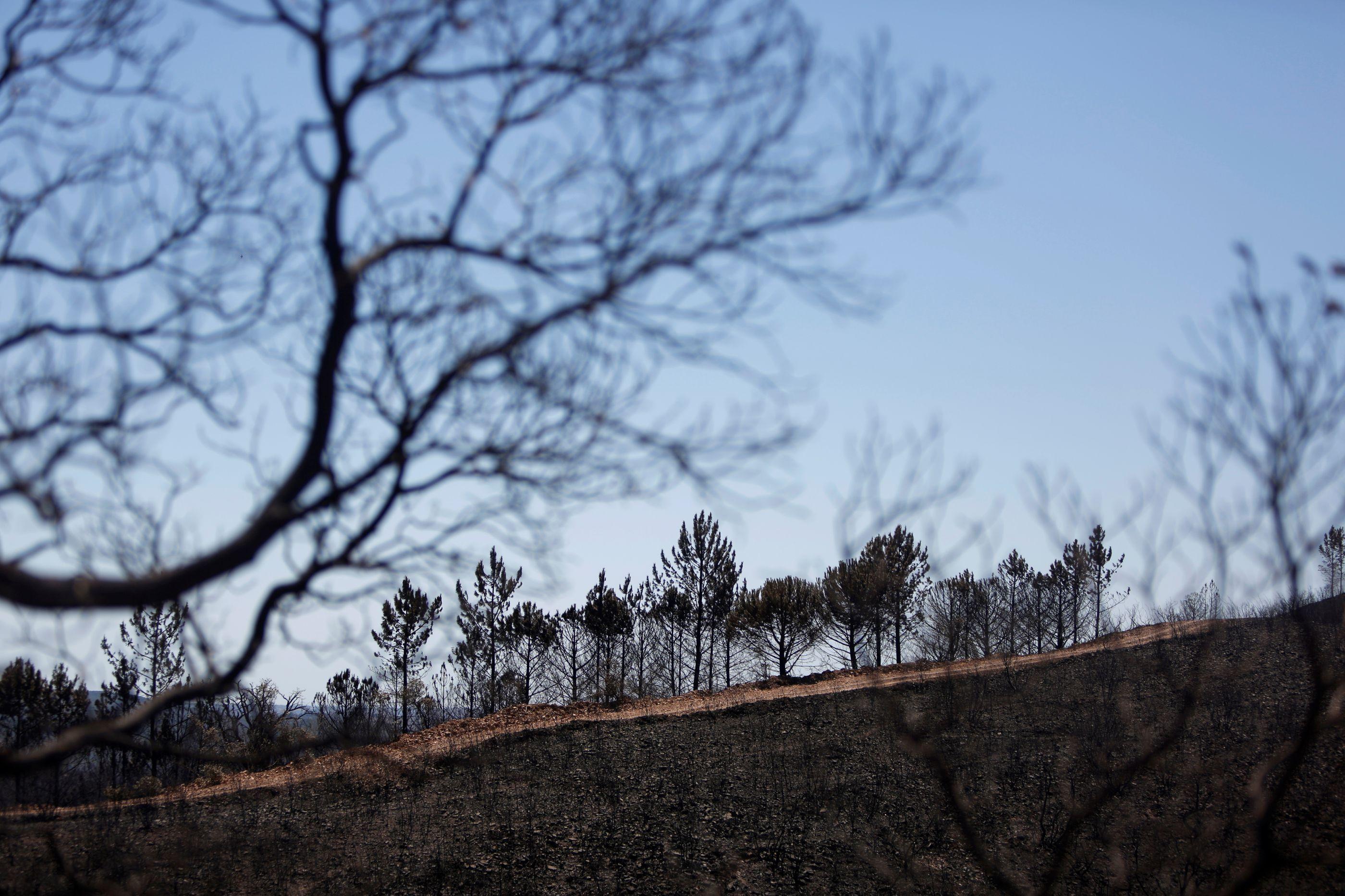Produtores florestais reclamam mais dinheiro na serra de Monchique