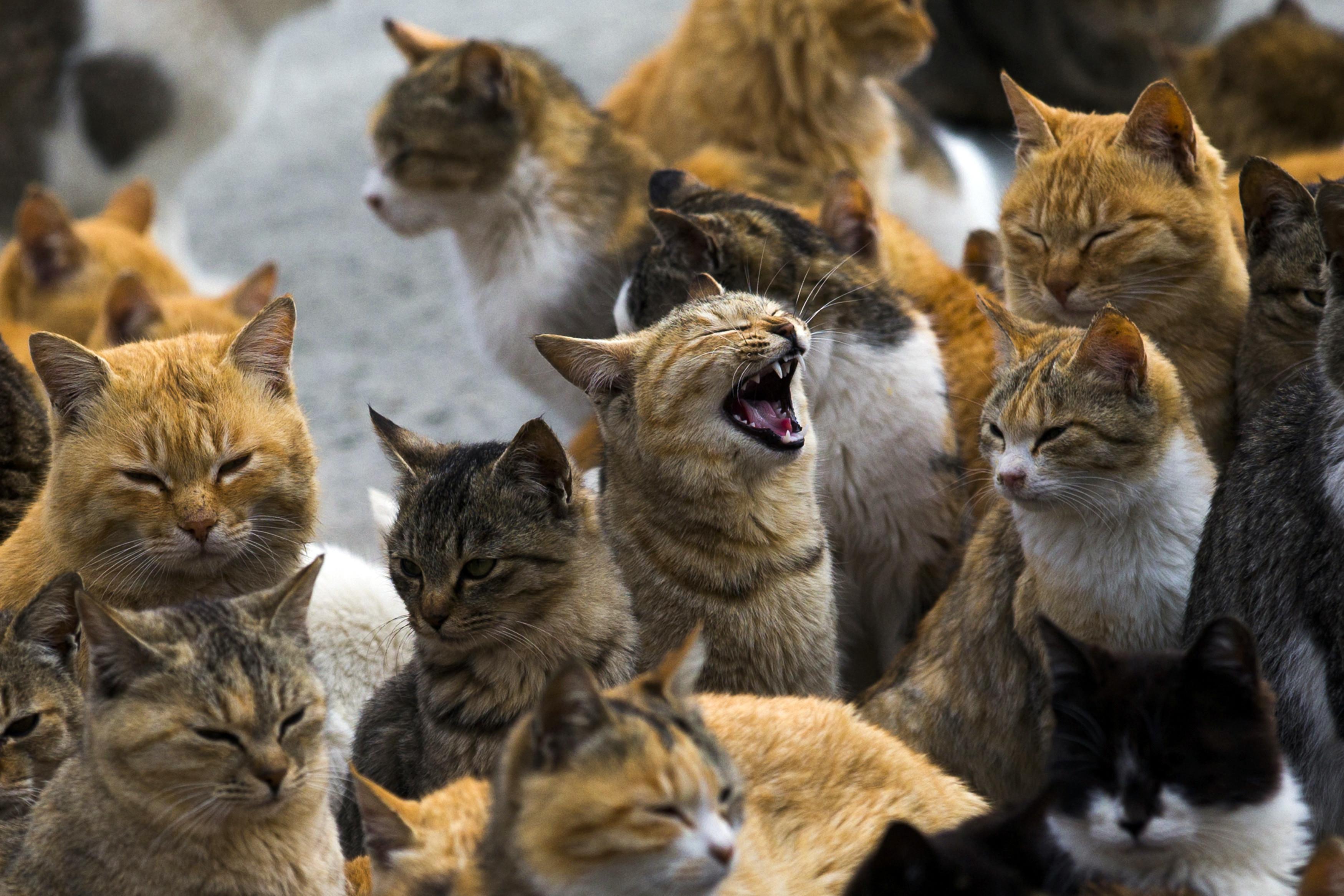 Um estranho fenómeno. Espreite a surreal e mágica 'Ilha dos Gatos'