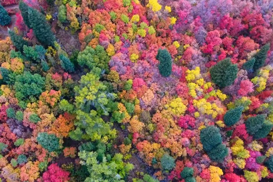Uma explosão de cores na folhagem de outono captada por drone
