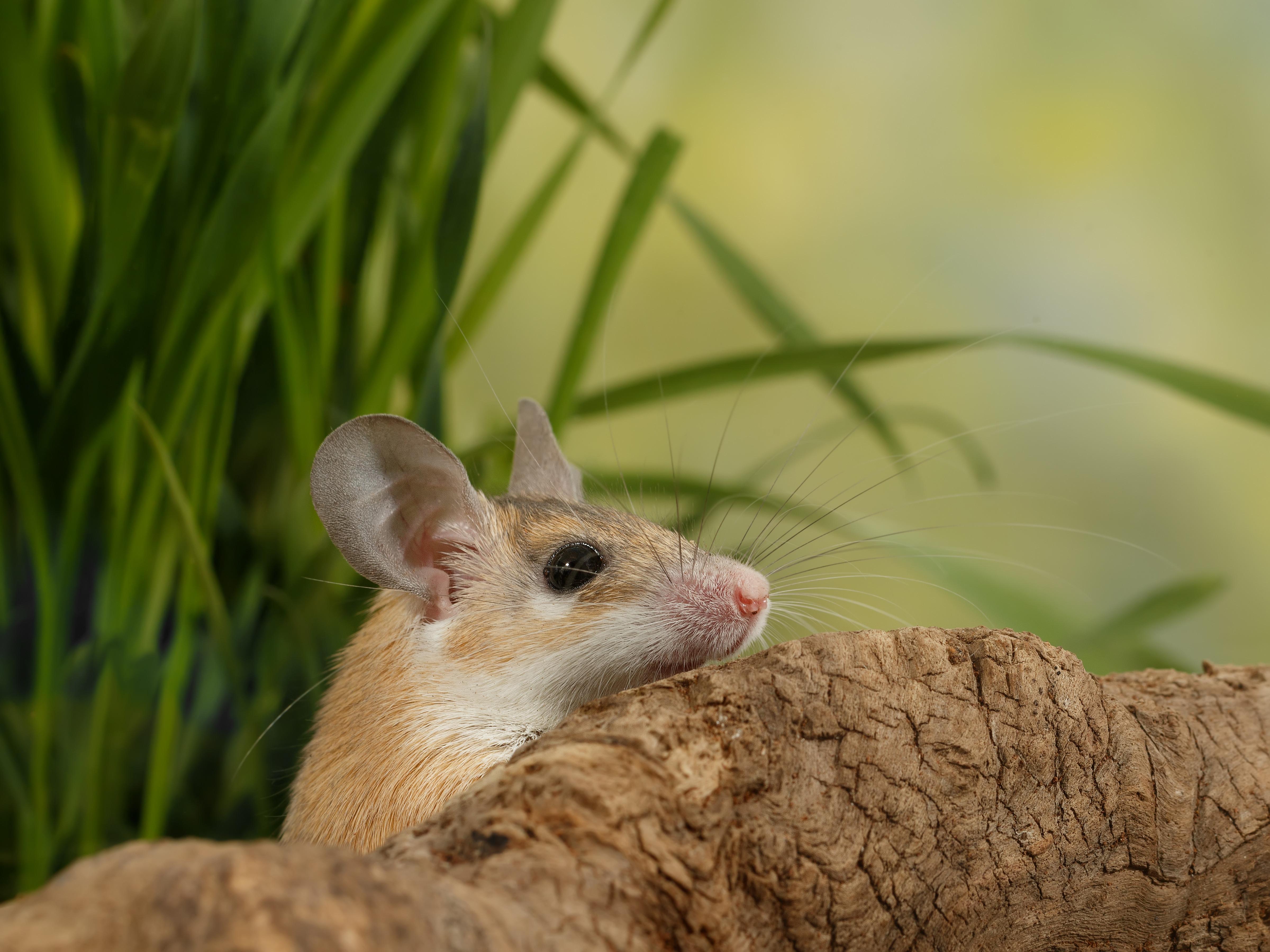 Saiba quais são os mamíferos que têm melhor relação com os humanos