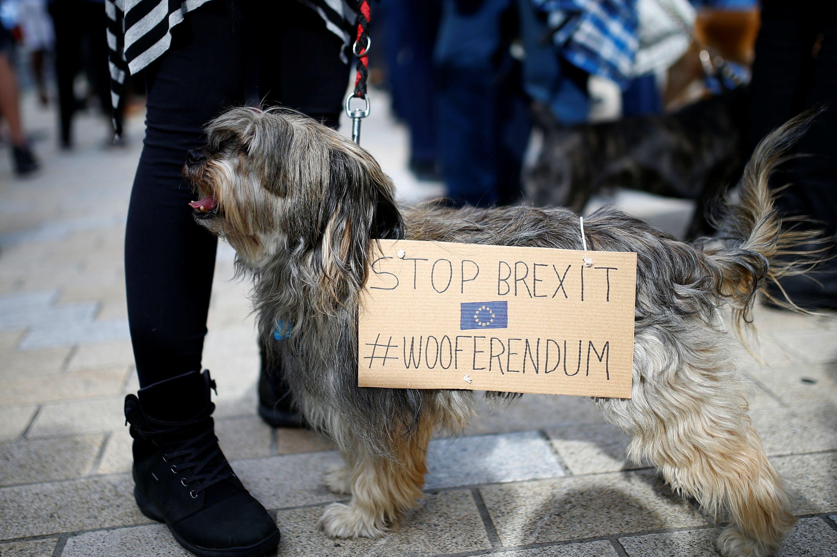 """Pernas e patas em protesto contra referendo do Brexit. """"Wooferendum"""""""