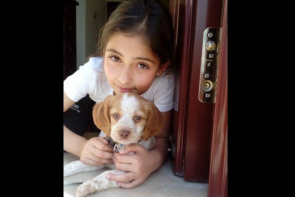 Revolta: A carta de um avô à pessoa que envenenou o cão da neta