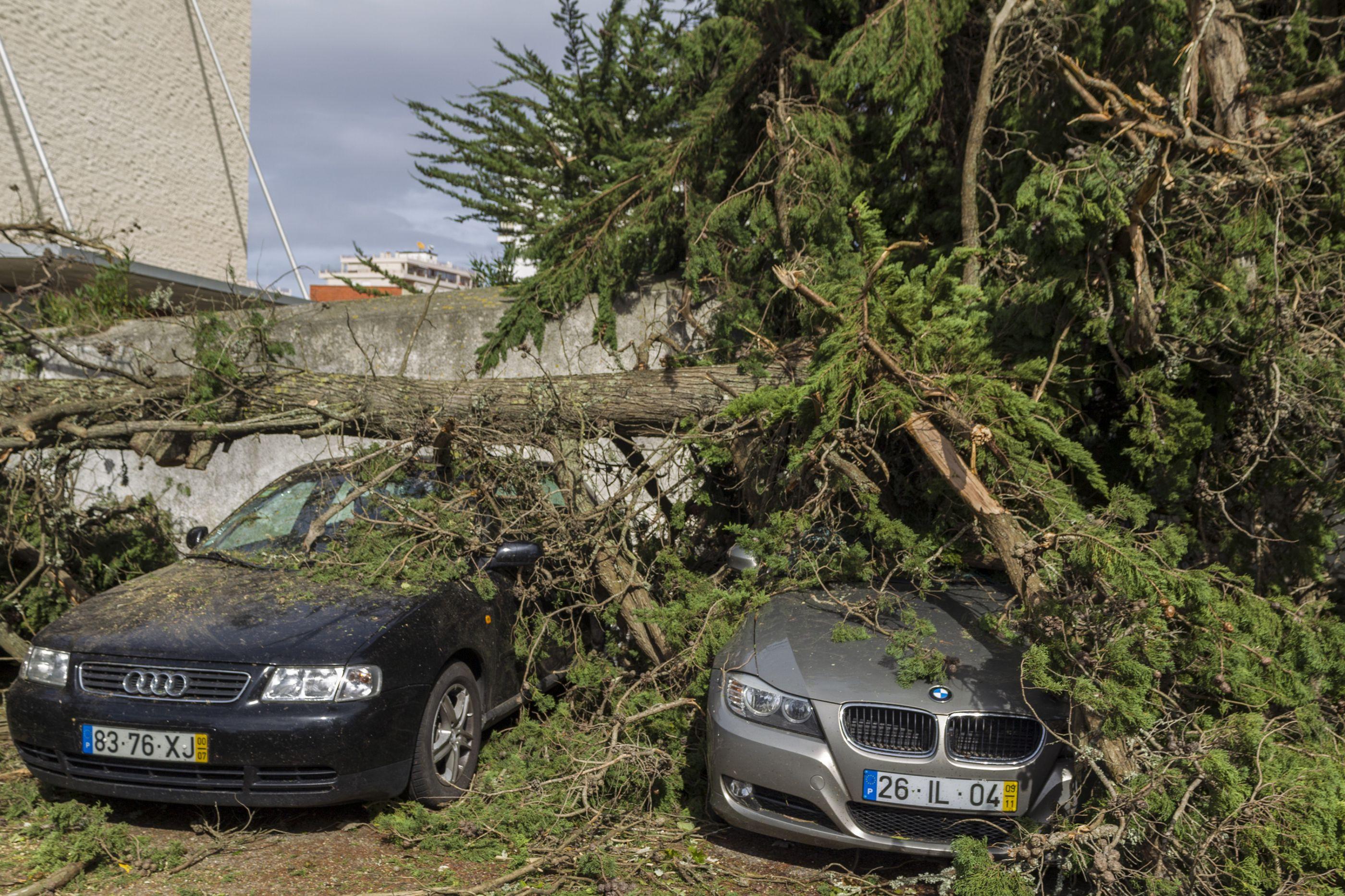 """Situações agrícolas """"mais preocupantes devido à tempestade são no Centro"""""""