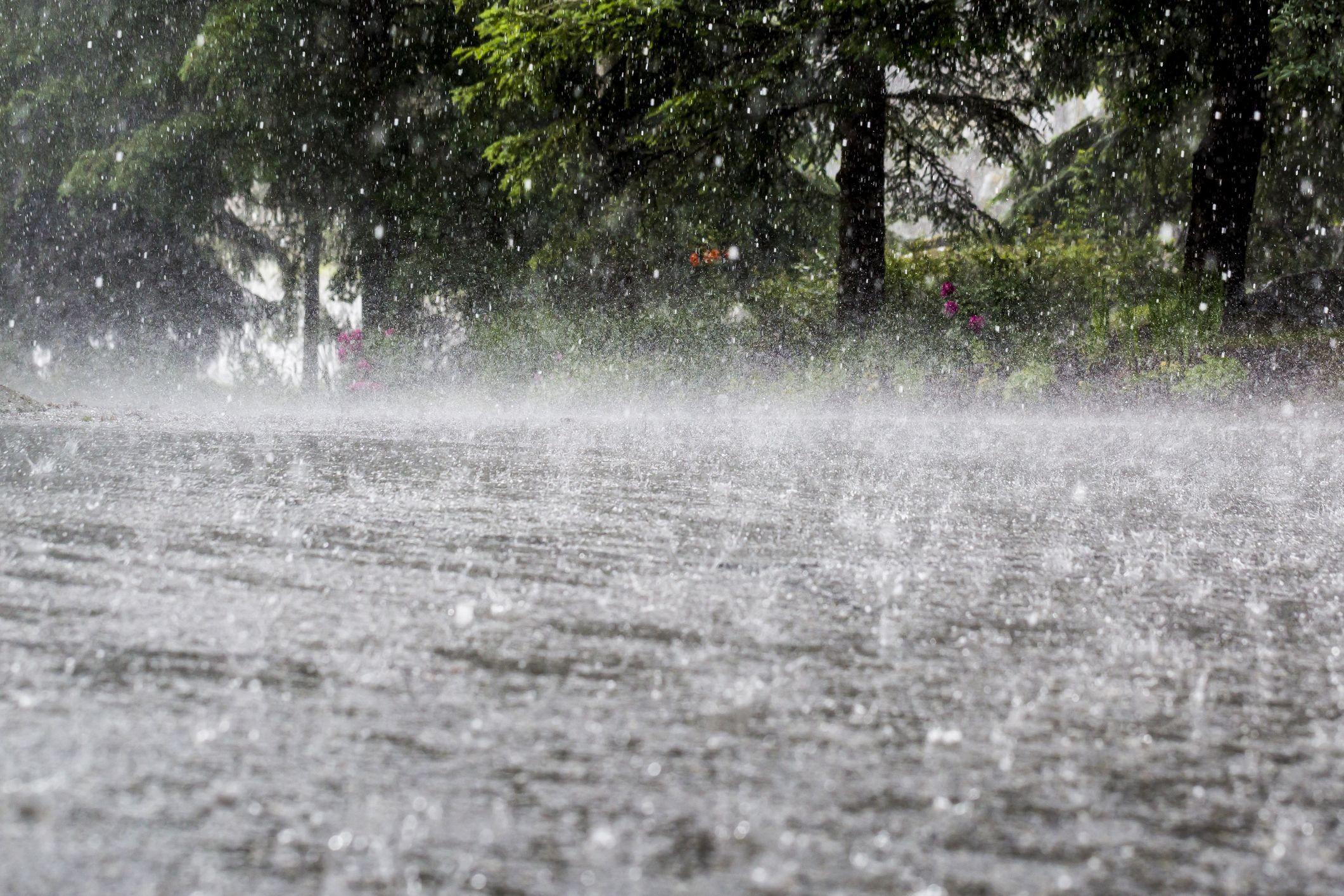 Quinze distritos sob aviso amarelo devido à chuva e vento forte