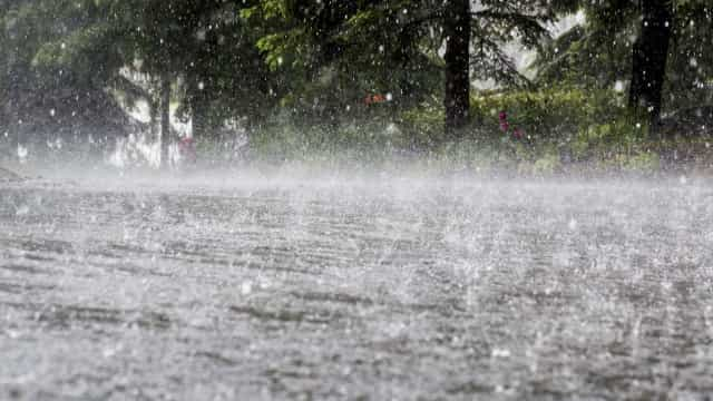 "Agricultores podem ficar com ""corda na garganta"" devido à falta de chuva"
