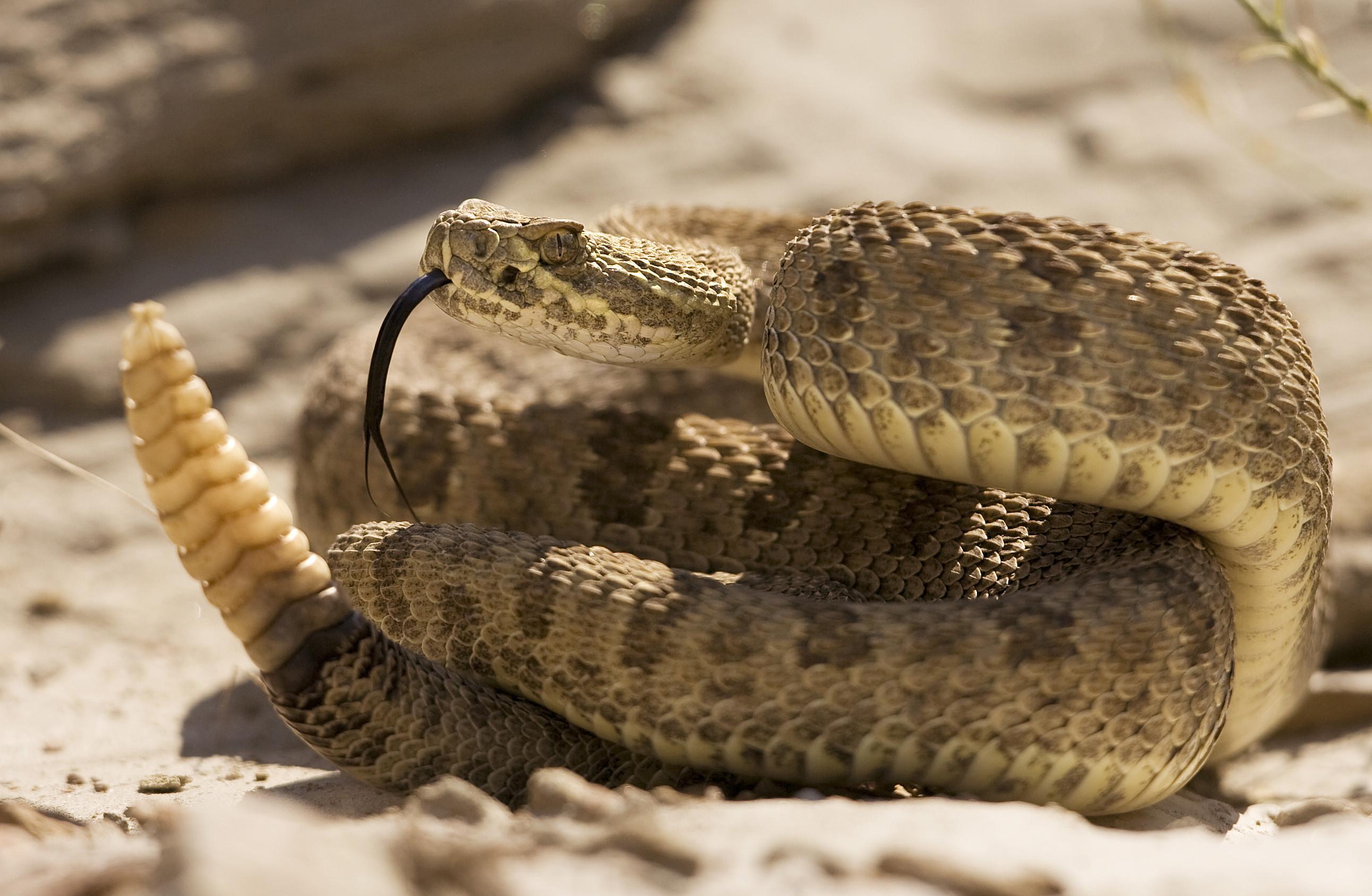 Polícia retira 25 cobras de apartamento nos EUA. 23 eram venenosas