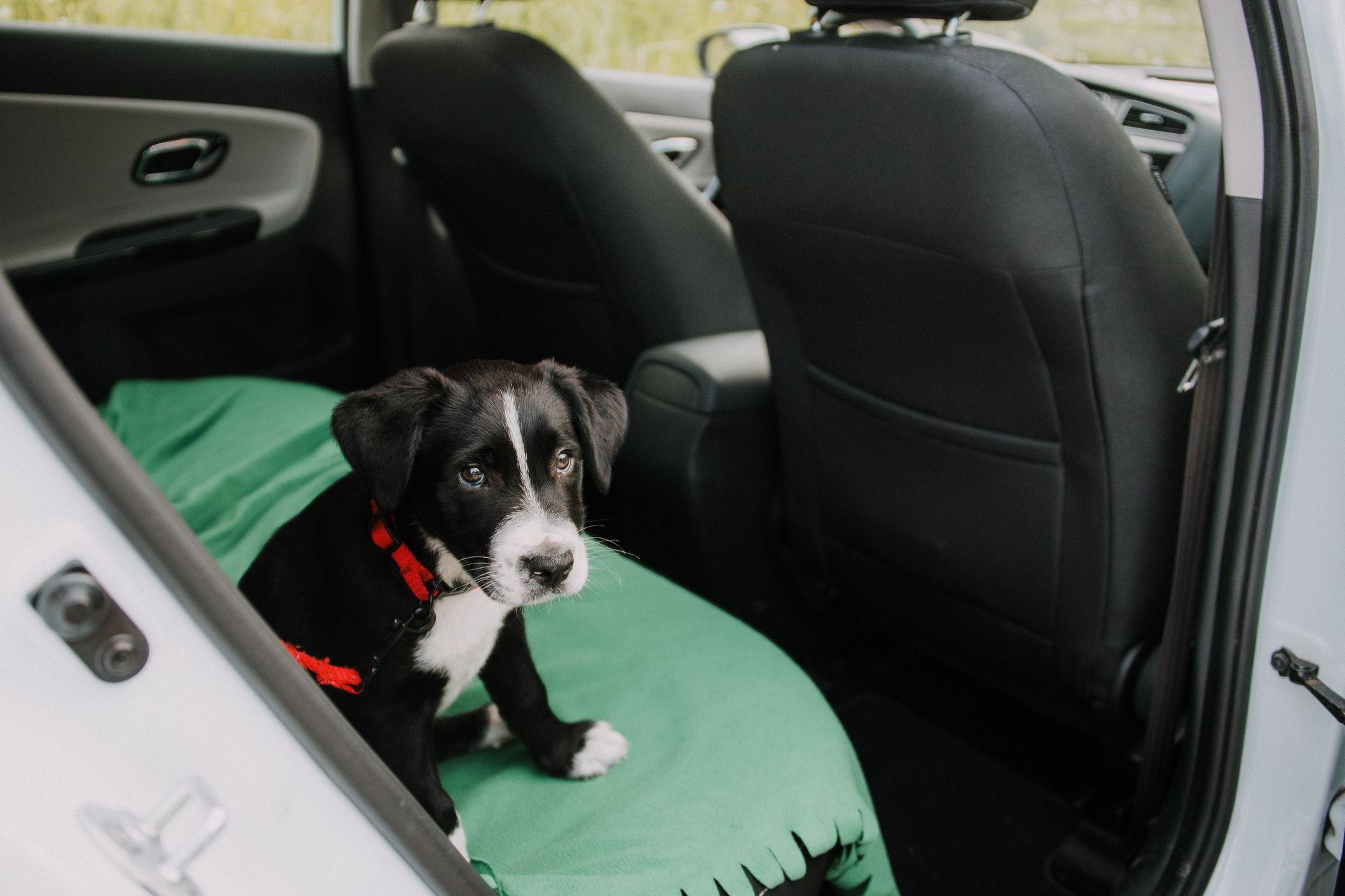 Tesla quer criar um modo especial para animais de estimação