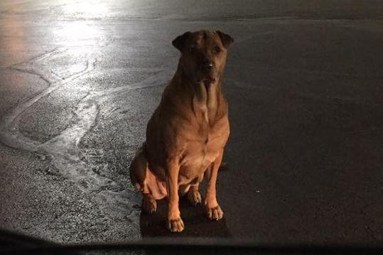 """Se vir esta cadela junto ao McDonald's não a alimente. """"É uma trapaceira"""""""