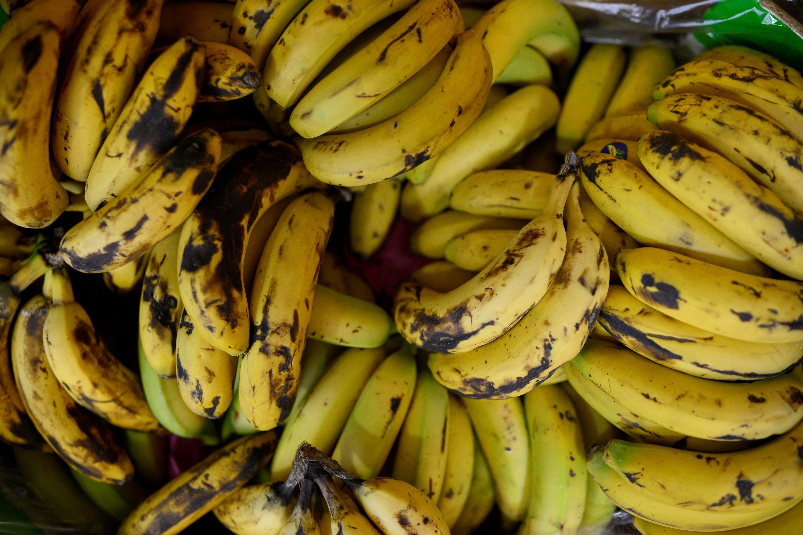 Vendedores de banana do norte de Moçambique tentam sobreviver a praga