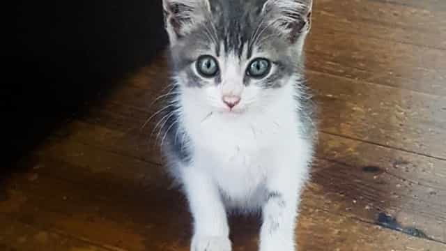 Funcho, o gato adotado pela Câmara do Funchal que tem Instagram