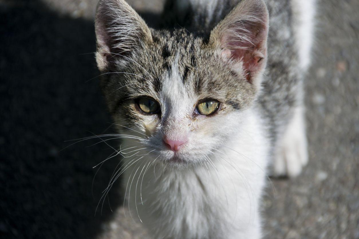 'Patrulha Gato' entra em ação este mês em Lisboa