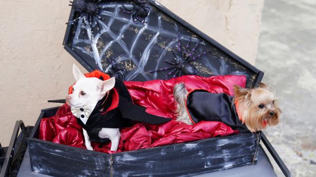 Os cães também celebram o Halloween em Nova Iorque