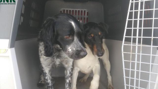 Roubaram cães para os deixarem presos em vedação